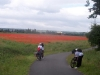 Poppy Field at Hawarden
